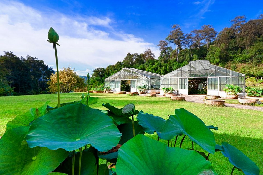 Queen Sirikit Botanic Garden, The Slightly Arboretum Which I Recommend You  To Visit.