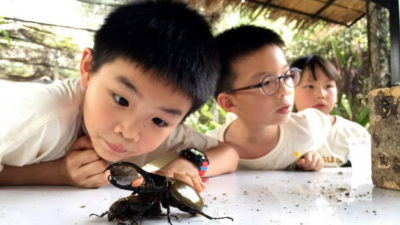 siam insect zoo, siam insect zoo chiang mai, insect zoo chiang mai, chiang mai attractions