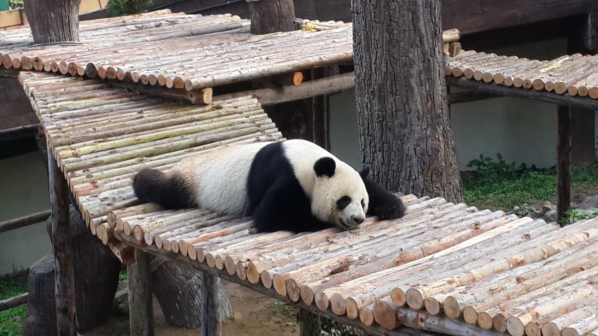 chiang mai zoo, chiangmai zoo
