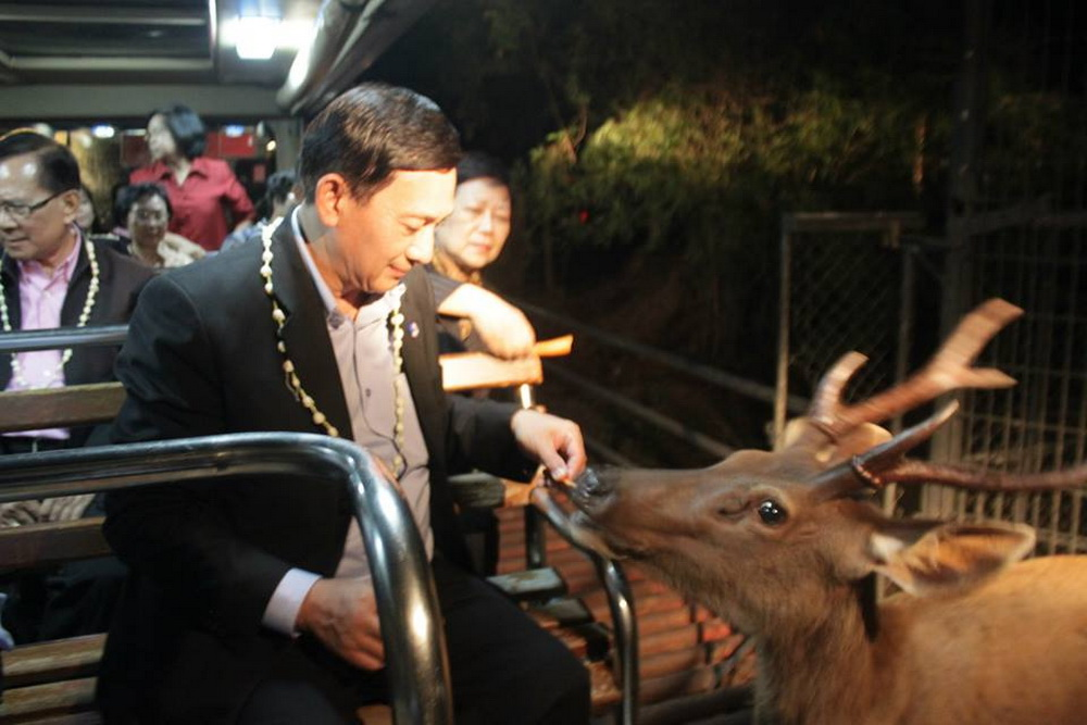 chiang mai night safari, chiangmai night safari, chiang mai night zoo, chiang mai attractions