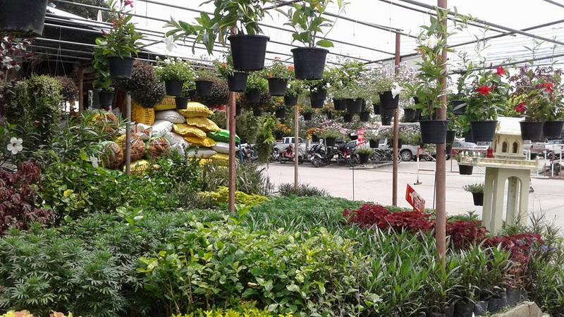 kam thieng flower market, chiang mai flower market, kamthieng flower market