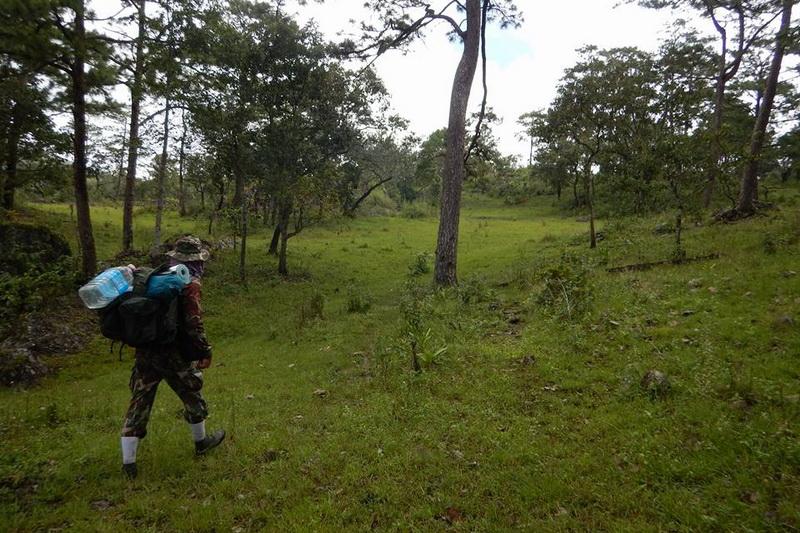 doi wiang pa national park, doi wiang pha national park, national parks in chiang mai